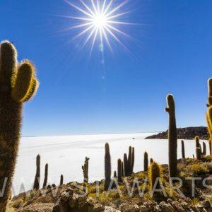 _E3A7546_Bolivien_Salar de Uyuni_Isla Incahuasi