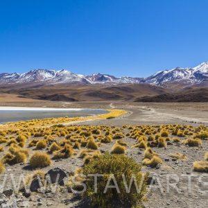 _E3A7869_Bolivien_Salar de Uyuni_Laguna Hedionda