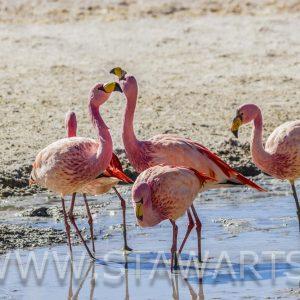 _MG_8236_Bolivien_Salar de Uyuni_Laguna Hedionda mit Flamingos